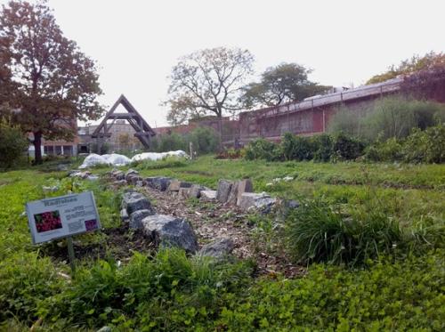 University City High School Urban Garden