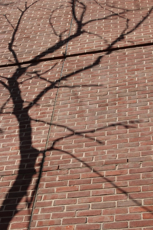 A shadow tree on the wall of the Steinberg Conference Center.