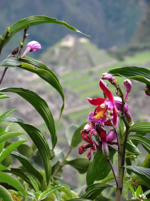 """First Place Nature Category: """"Orchids of Machu Picchu,"""" by Alex Converse"""