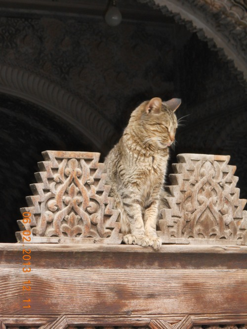 Cat sentry. Photo by Professor Thomas Max Safley.