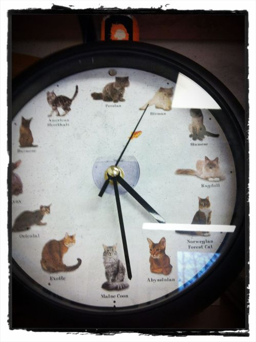 Casey did this. If you put a battery in, the hours chime with different cat meows.