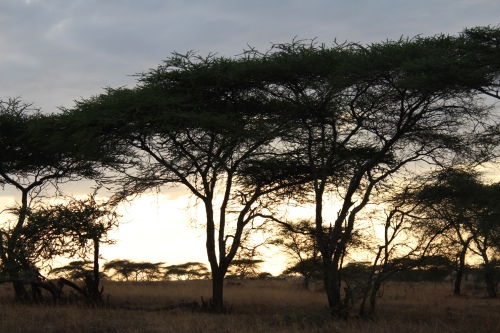 Serengeti Sunrise – Serengeti National Park, Tanzania