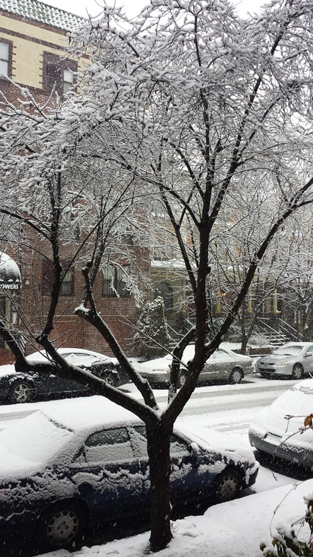 Beautiful snow-covered tree in West Philly