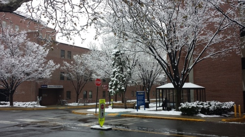 Snow-covered trees by Pennsylvania Hospital