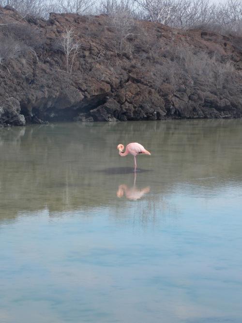 A lone flamingo.