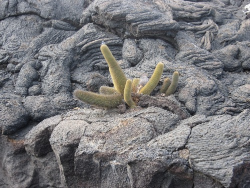 Plant life in the lava flows.