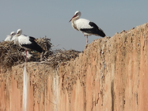 The infamous storks.