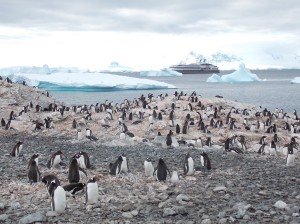 "First landing on the Antarctic continent. Feb 4th, 2014. Penguins and our ship, the gorgeous ""L'Austral""."