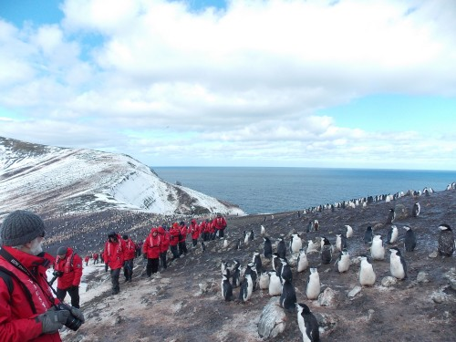 Above: A very windy hike through a huge colony of chinstrap penguins (about 200,000 pairs) at Baily Head, on the volcanic Deception Island.