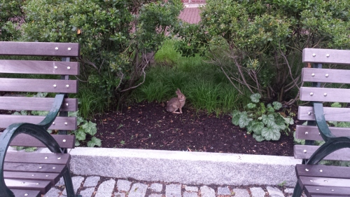 Adorable bunny near The Palestra