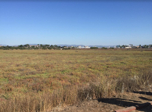 Penn Serves LA Restores Ballona Wetland Acres of Vegetation to Preserve