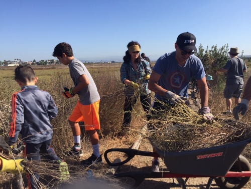Penn Serves LA Restores Ballona Wetlands - family volunteering