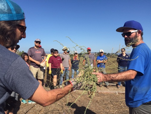 Penn Serves LA Restores Ballona Wetlands volunteers learn to recognize invasive plants