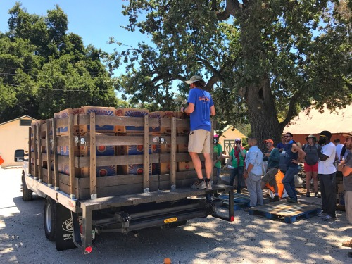 6,400 pounds of fruit that Penn Serves LA helped pick for Food Forward, photo by Kiera Reilly