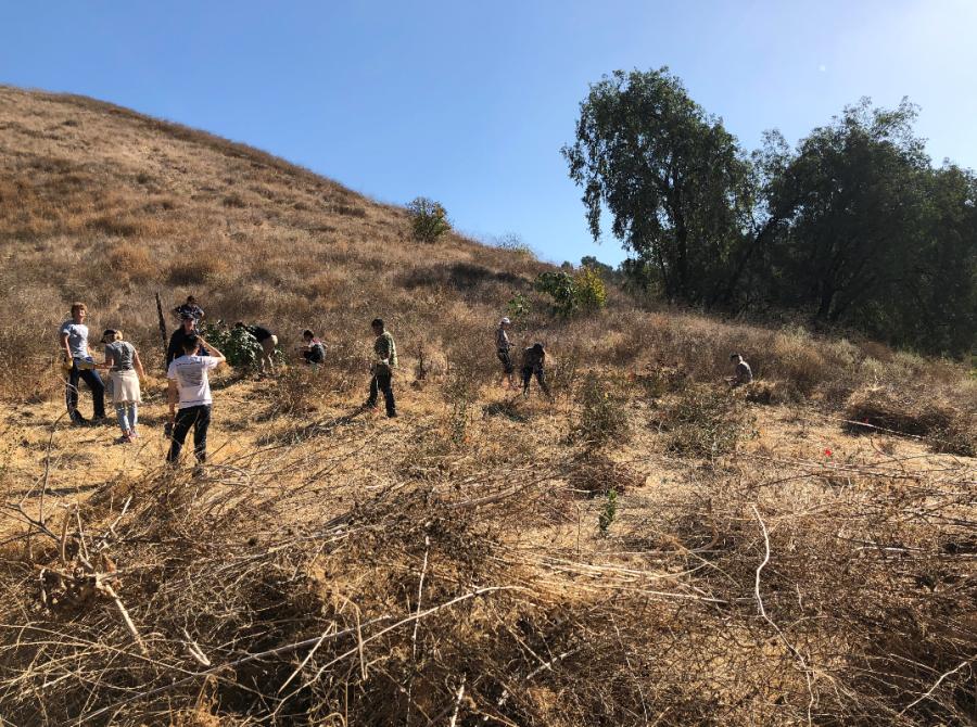 Penn Serves LA volunteering with TreePeople Los Angeles Penn Alumni