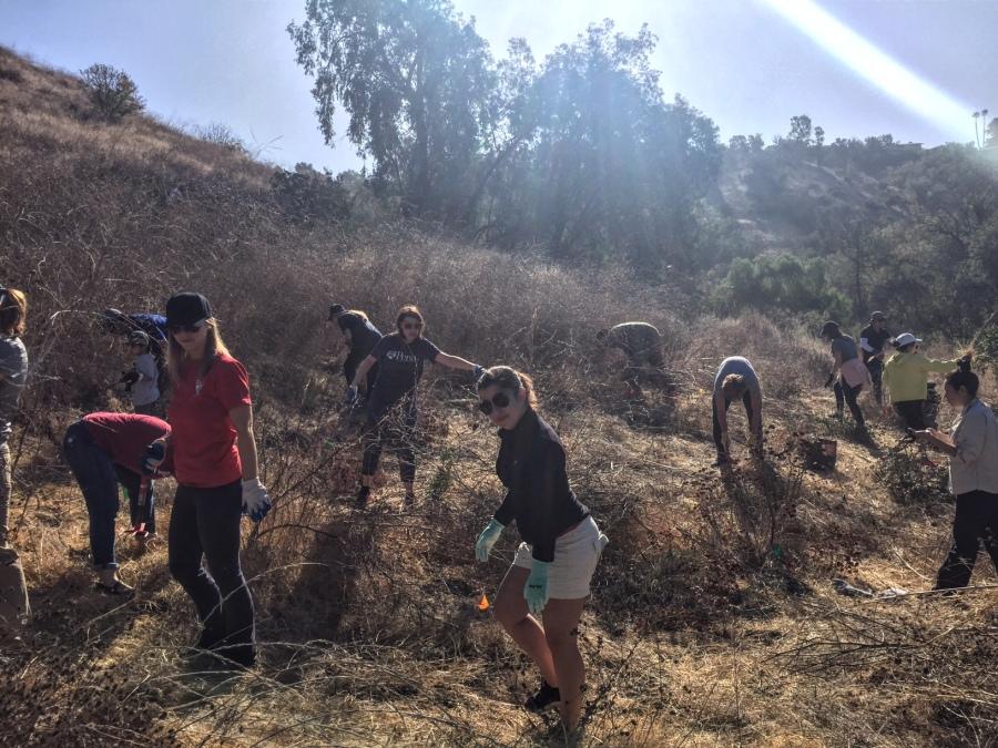 Penn Serves LA volunteers with TreePeople Los Angeles Penn Alumni