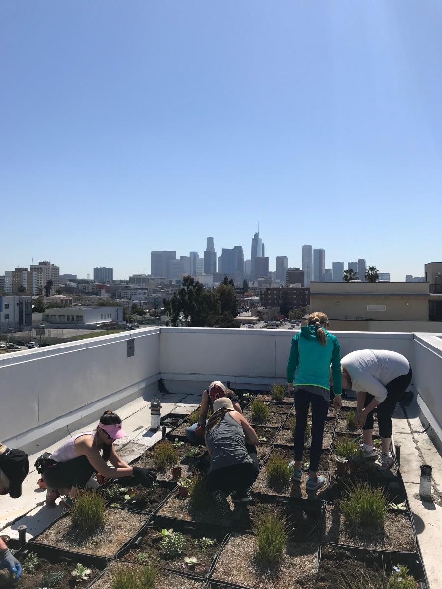 Penn Serves LA plants succulents for The Skid Row Housing Trust volunteering Los Angeles